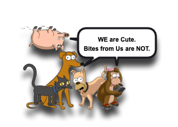 Animal Bite Wounds